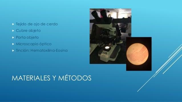 Laboratorio de Histologia: Visualización en microscopio  Slide 3