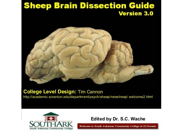 College Level Design: Tim Cannon http://academic.scranton.edu/department/psych/sheep/newsheep/ welcome2.html Edited by Dr....