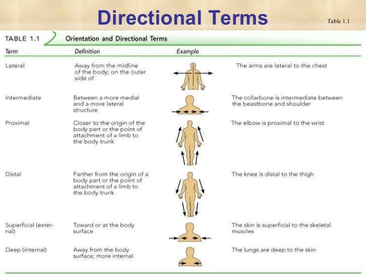 worksheet. Anatomical Position Worksheet. Grass Fedjp Worksheet ...