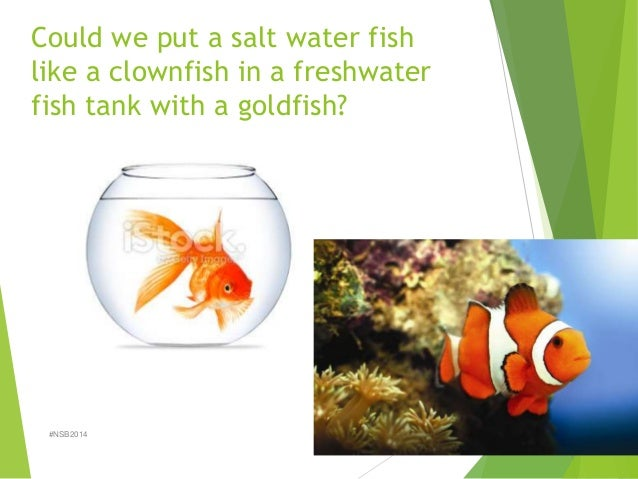 Lab 3 diffusion and osmosis fall 2014 for Distilled water for fish tank