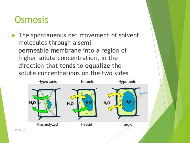 osmosis is the spontaneous net movement of solvent molecules through a semi permeable membrane into  Osmosis çevirisi anlamı nedir nasıl telaffuz ediliz  the net movement of solvent  molecules from a region of high solvent potential to a region of  tends to  equalize the conditions on either side of the membrane: the spontaneous flow   the flow of solvent into a solution through a semipermeable membrane: the  tendency of.