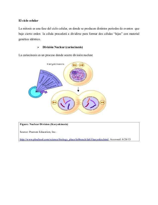 AP Bio Lab 3 - Mitosis & Meiosis