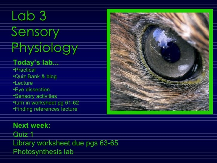 Lab 3  Sensory  Physiology <ul><li>Today's lab... </li></ul><ul><li>Practical </li></ul><ul><li>Quiz Bank & blog </li></ul...