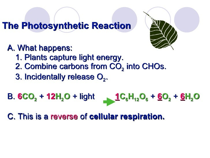 Lab 4 photosynthesis 11 the photosynthetic reaction publicscrutiny Gallery