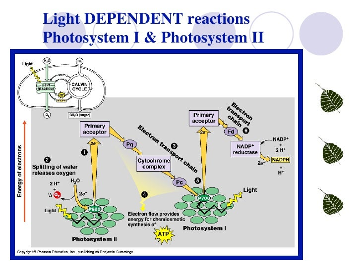 Reaction photosynthesis diagram labeled auto wiring diagram today lab 4 photosynthesis rh slideshare net blank photosynthesis diagram photosynthesis drawing ccuart Images