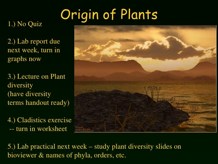 Origin of Plants 1.) No Quiz 2.) Lab report due  next week, turn in  graphs now 3.) Lecture on Plant  diversity (have dive...
