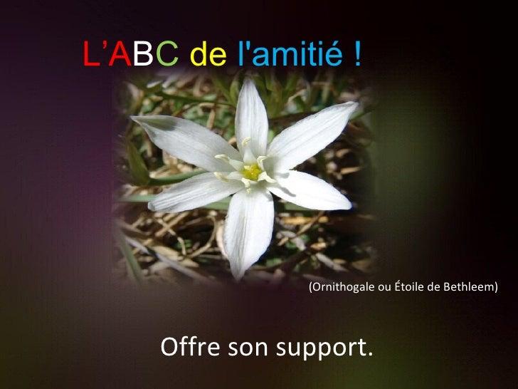 (Ornithogale ou Étoile de Bethleem) Offre son support. L'A B C   de   l'amitié !