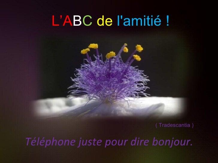 Téléphone juste pour dire bonjour. ( Tradescantia ) L'A B C   de   l'amitié !