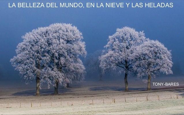 LA BELLEZA DEL MUNDO, EN LA NIEVE Y LAS HELADAS TONY-BARES