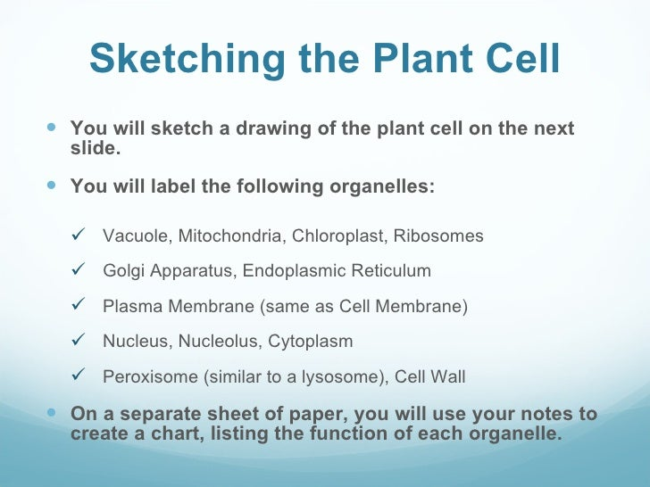 animal cell paragraph