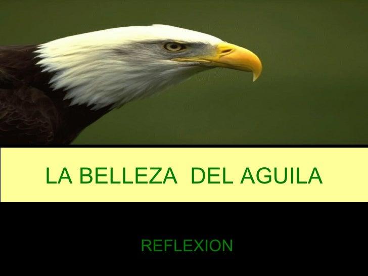 LA BELLEZA  DEL AGUILA REFLEXION
