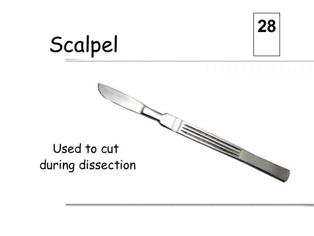 Related Keywords & Suggestions for Dissection Equipment