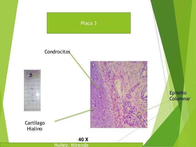 Laboratorio de Histologia Placas Slide 3