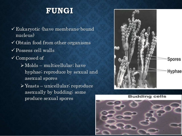 FUNGI  Eukaryotic (have membrane-bound nucleus)  Obtain food from other organisms  Possess cell walls  Composed of  M...