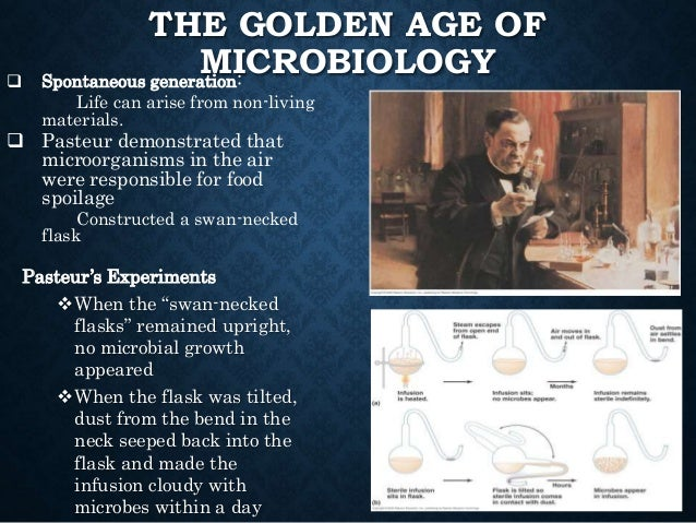 """THE GOLDEN AGE OF MICROBIOLOGY Pasteur's Experiments When the """"swan-necked flasks"""" remained upright, no microbial growth ..."""