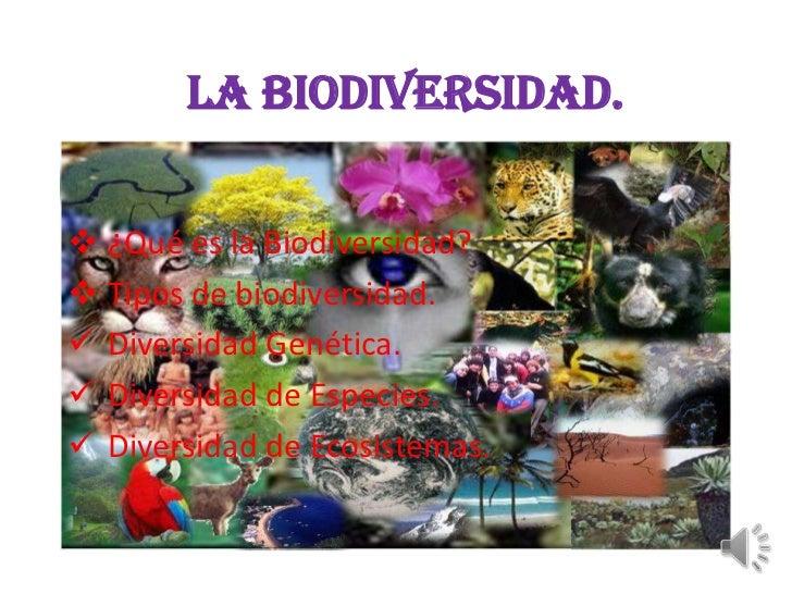 LA BIODIVERSIDAD. ¿Qué es la Biodiversidad? Tipos de biodiversidad. Diversidad Genética. Diversidad de Especies. Dive...