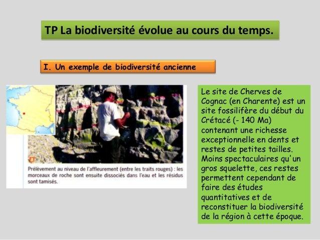 TP La biodiversité évolue au cours du temps.I. Un exemple de biodiversité ancienne                                        ...