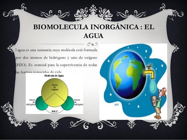 BIOMOLECULA INORGÁNICA : EL                    AGUAl agua es una sustancia cuya molécula está formadapor dos átomos de hid...