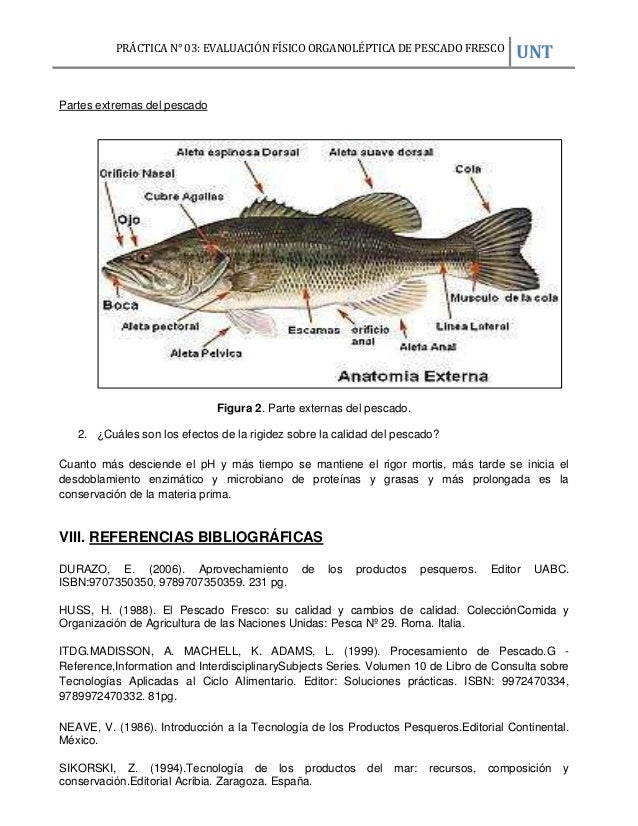 EXAMEN FÍSICO ORGANOLÉPTICO DEL PESCADO DE ESPECIE JUREL.