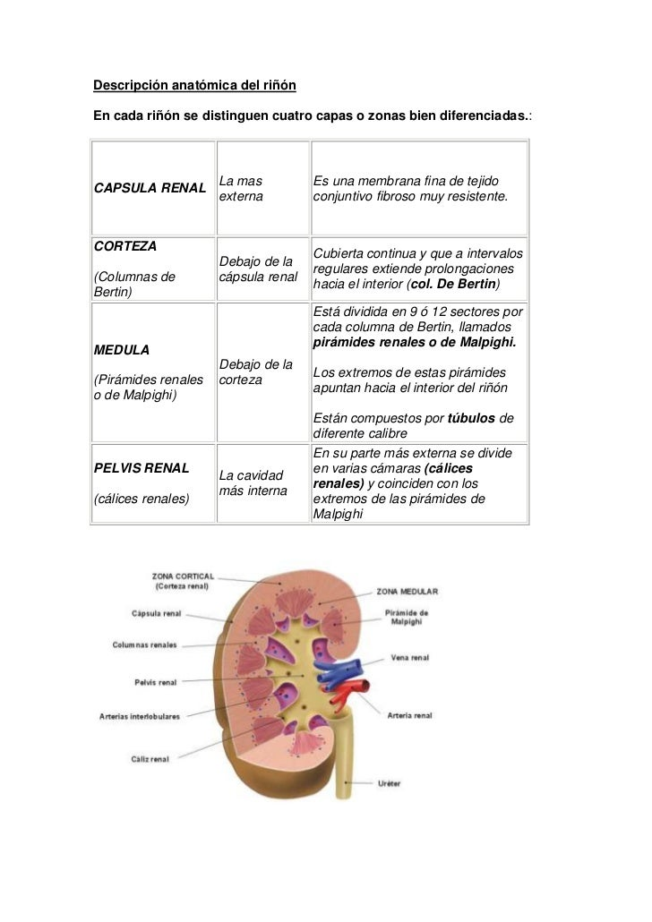 Laboratorio riñón