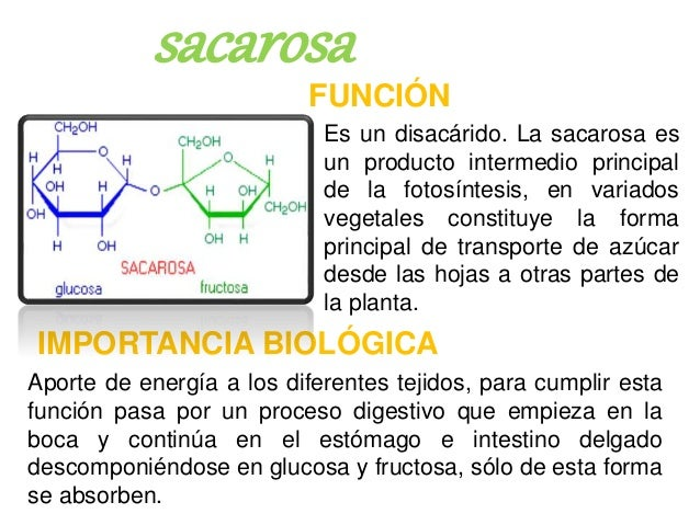 CARBOHIDRATOS- FUNCIONES E IMPORTANCIA BIOLOGICA