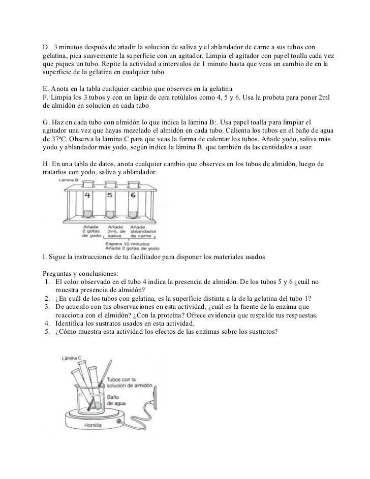 Laboratorio de enzimas Slide 2