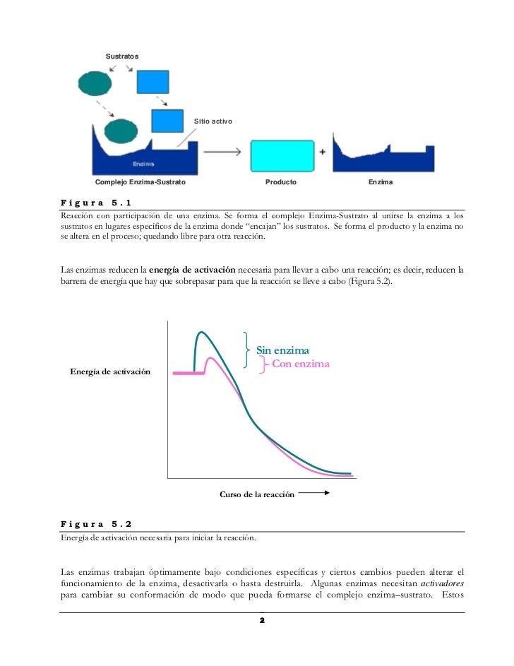Sustratos                                       Sitio activo          Complejo Enzima-Sustrato                            ...