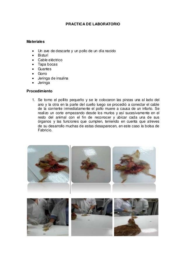 Laboratorio de la anatomia del ave