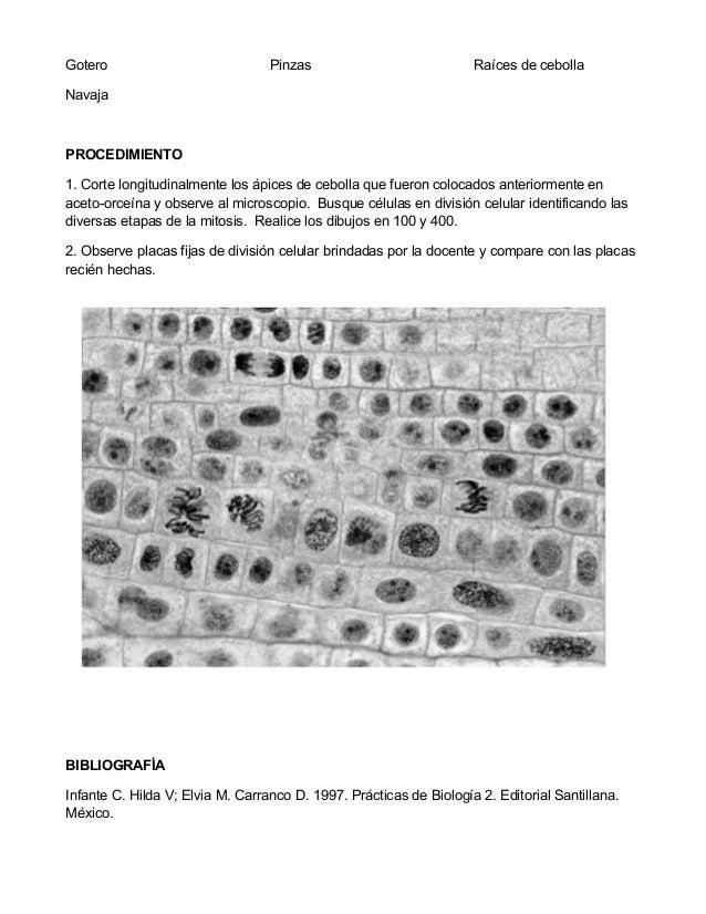 Laboratorio n.3 Slide 2