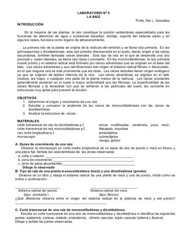 Laboratorio n.5