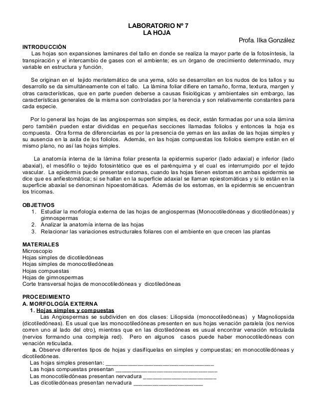LABORATORIO Nº 7  LA HOJA  Profa. Ilka González  INTRODUCCIÓN  Las hojas son expansiones laminares del tallo en donde se r...