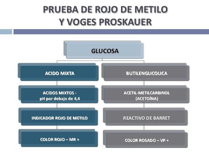 PRUEBA DE ROJO DE METILO Y VOGES PROSKAUER<br />