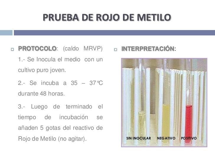 PRUEBA DE ROJO DE METILO<br />PROTOCOLO: (caldo MRVP) 1.- Se Inocula el medio  con un cultivo puro joven. <br />2.- Se in...