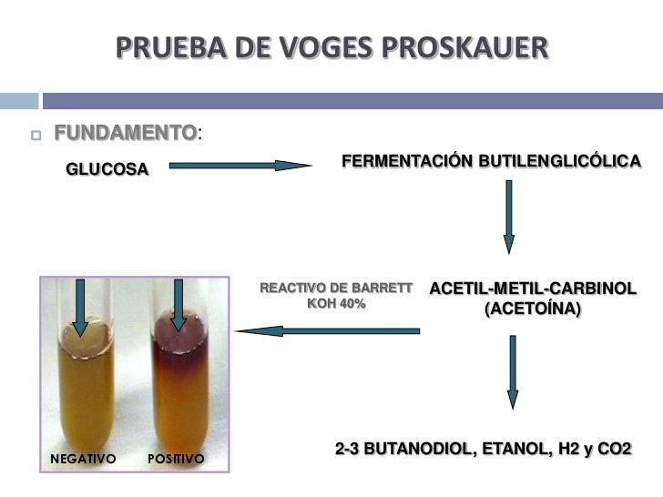 PRUEBA DE VOGES PROSKAUER<br />FUNDAMENTO:<br />FERMENTACIÓN BUTILENGLICÓLICA<br />GLUCOSA<br />ACETIL-METIL-CARBINOL<br /...