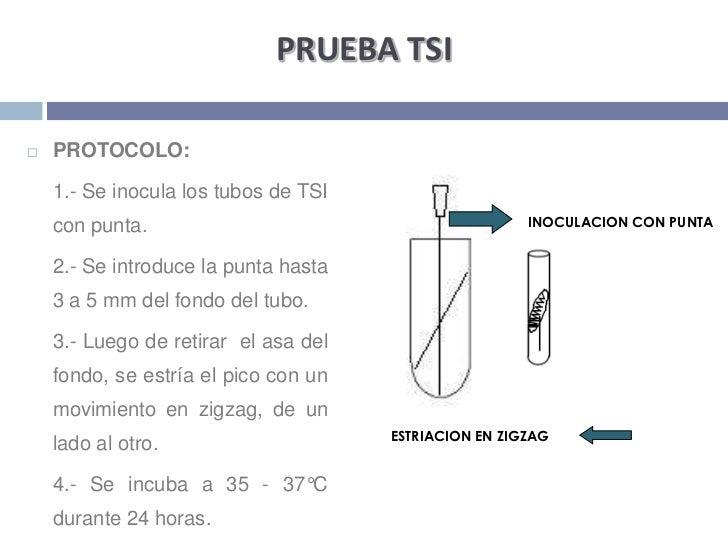 PRUEBA TSI<br />PROTOCOLO:<br />1.- Se inocula los tubos de TSI con punta. <br />2.- Se introduce la punta hasta 3 a 5 m...