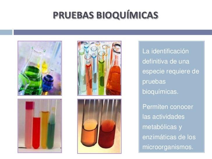 PRUEBAS BIOQUÍMICAS<br />La identificación definitiva de una especie requiere de pruebas bioquímicas. <br />Permiten conoc...