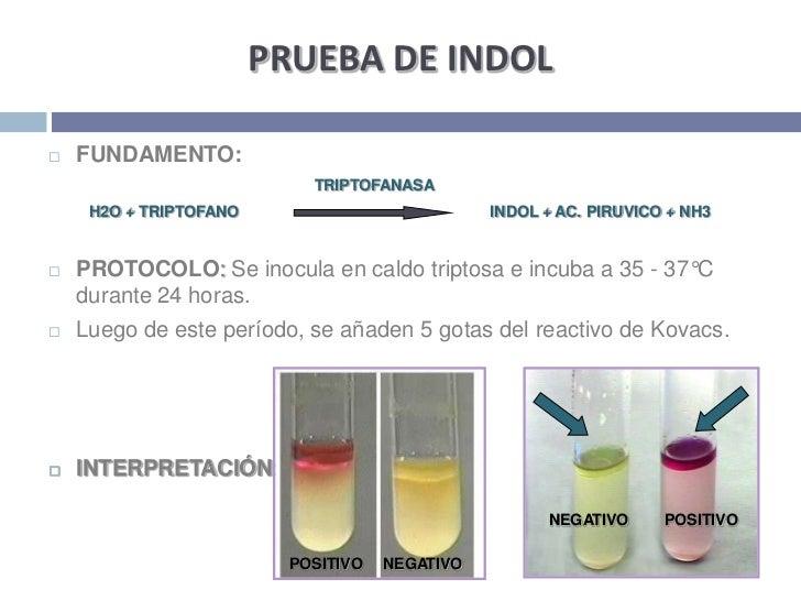 PRUEBA DE INDOL<br />FUNDAMENTO:<br />      TRIPTOFANASA<br />H2O + TRIPTOFANO                       INDOL + AC. PIRUVIC...