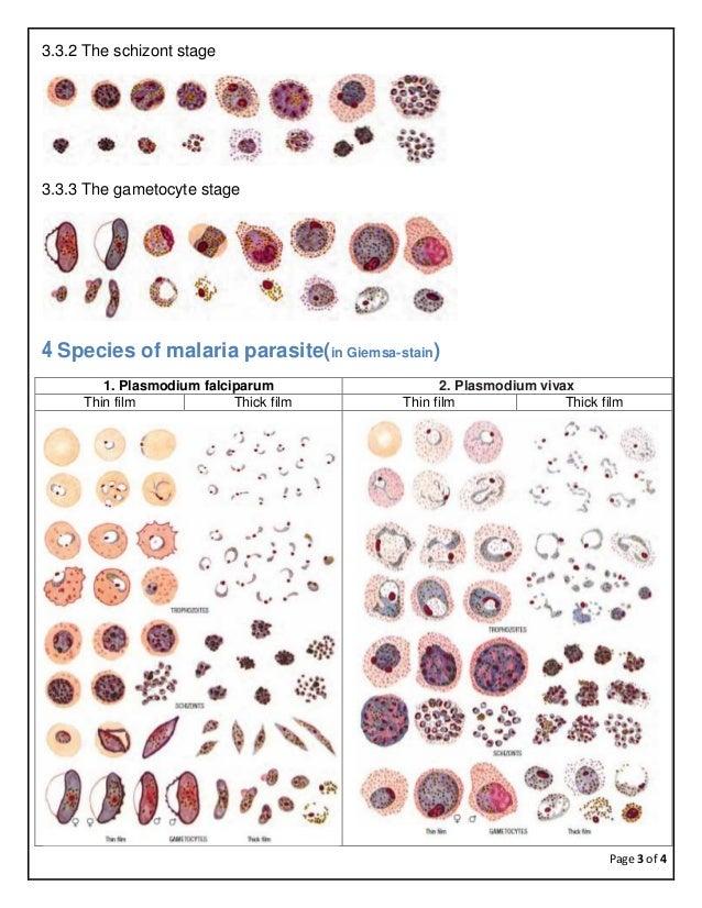 Laboratory diagnosis of malaria Slide 3
