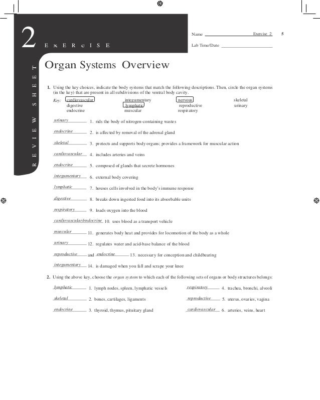 Human Anatomy And Physiology Laboratory Manual Exercise - Daily ...