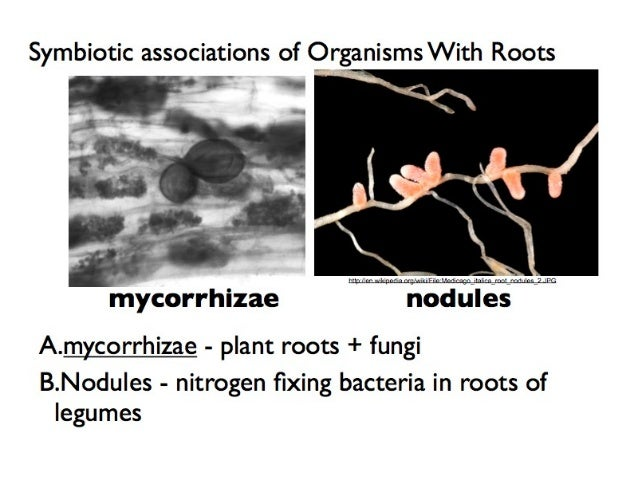 Fungi | Basic Biology