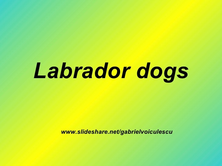 Labrador dogs www.slideshare.net/gabrielvoiculescu