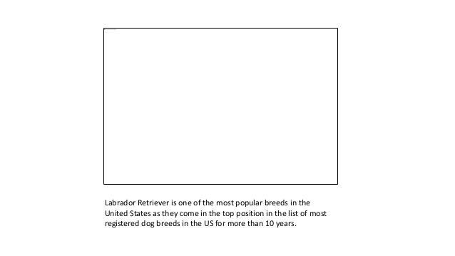10+ Cutest Gifts for Labrador Retriever Lovers Slide 2
