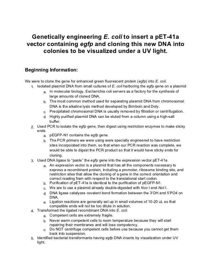 dna lab report