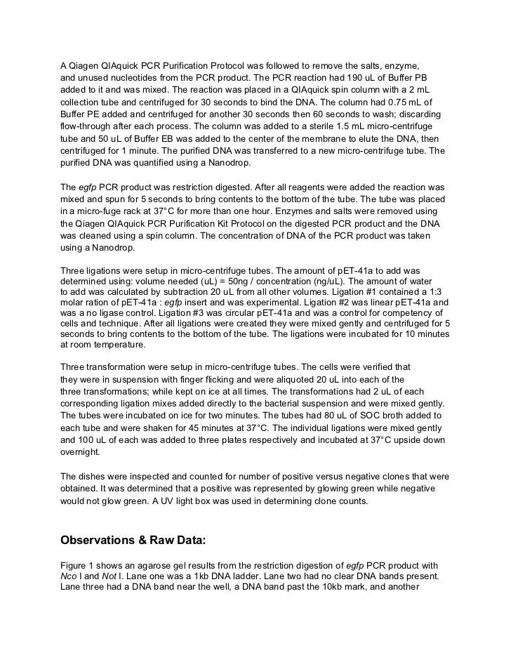 Biotech final lab report