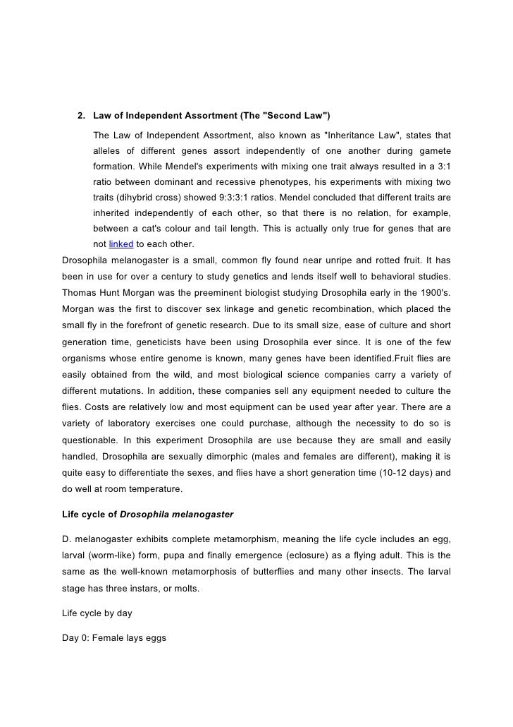 Law of torts negligence essay / English essays for leaving cert