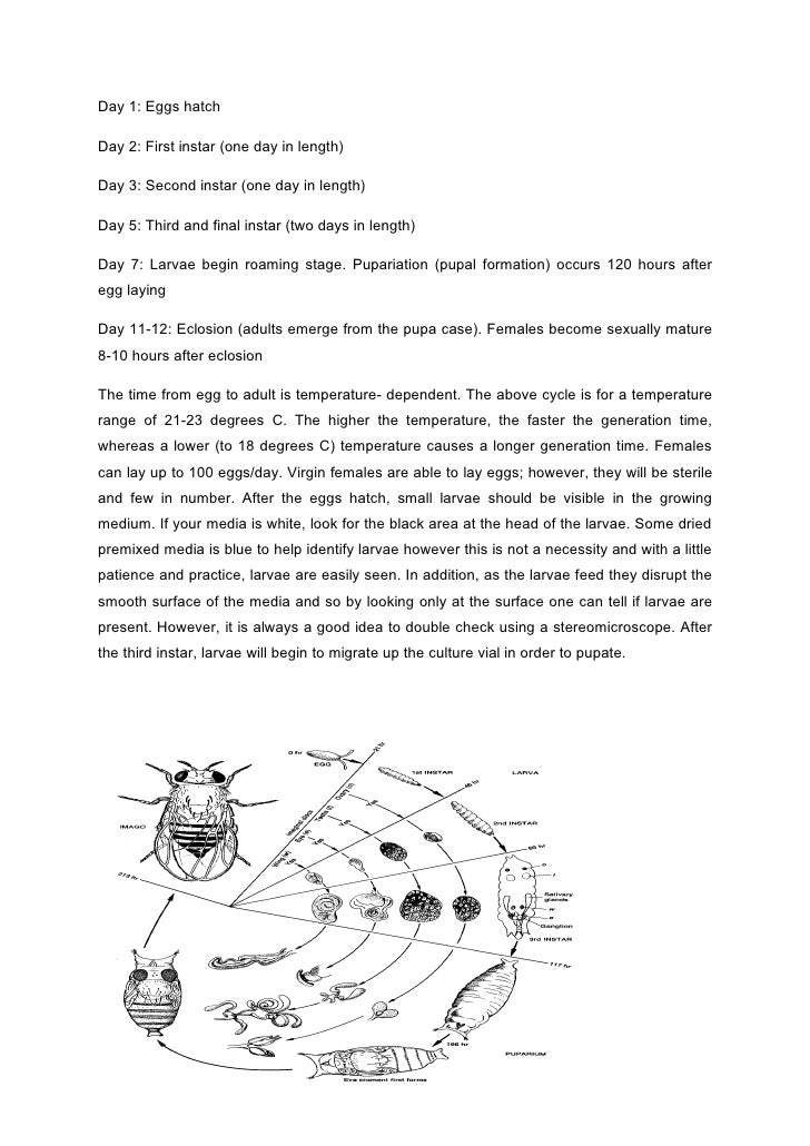d melanogaster lab report Drosophila melanogaster, the fruit fly, is an excellent organism for genetics studies because it has simple food requirements hints for your lab report.