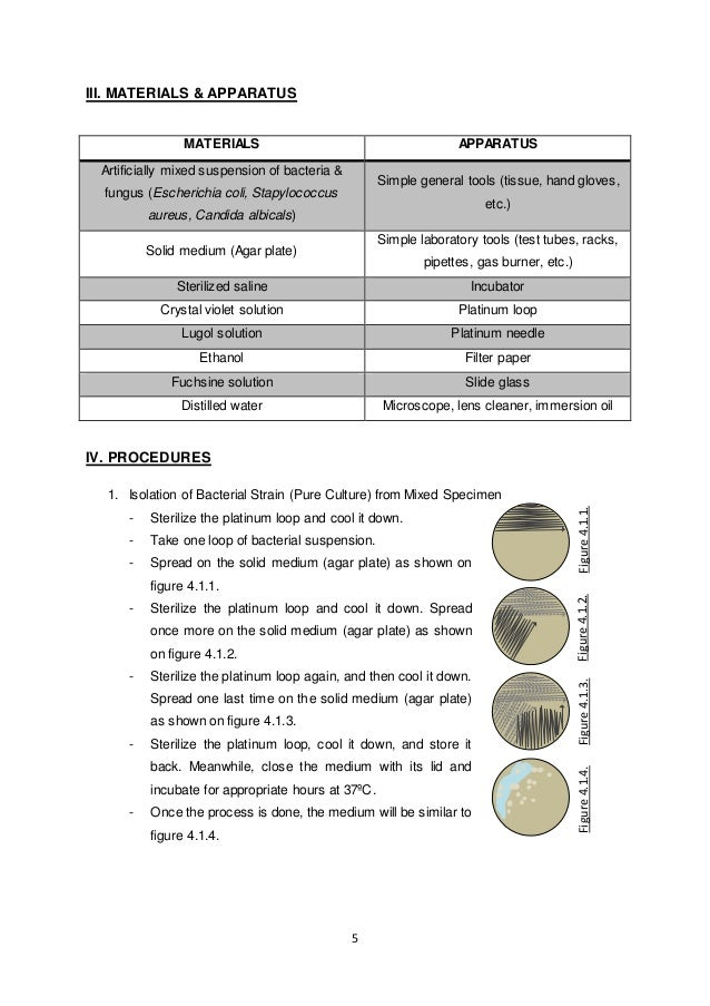 Examples of microbiology lab reports
