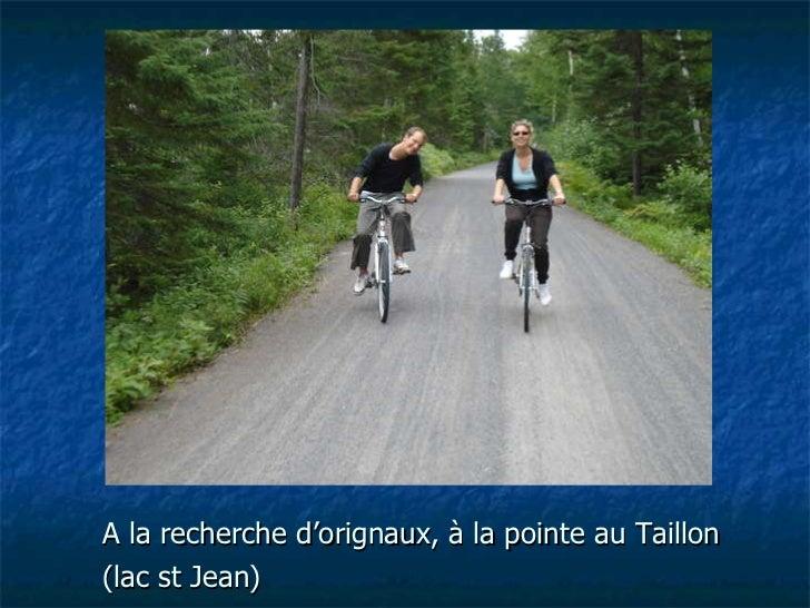 A la recherche d'orignaux, à la pointe au Taillon (lac st Jean)
