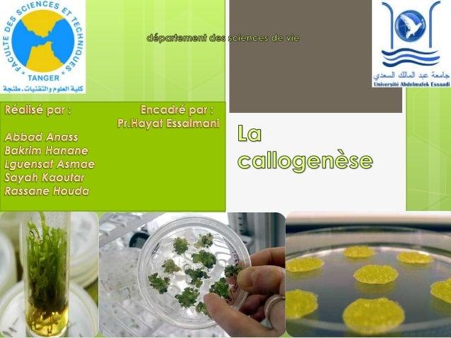 Introduction  La biotechnologie: Technologies impliquant l'obtention et/ou l'utilisation d'organismes génétiquement modif...