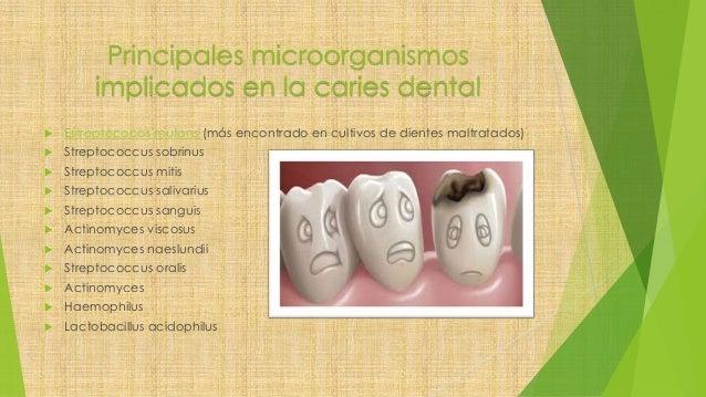 Principales microorganismos implicados en la caries dental  Estreptococos mutans (más encontrado en cultivos de dientes m...